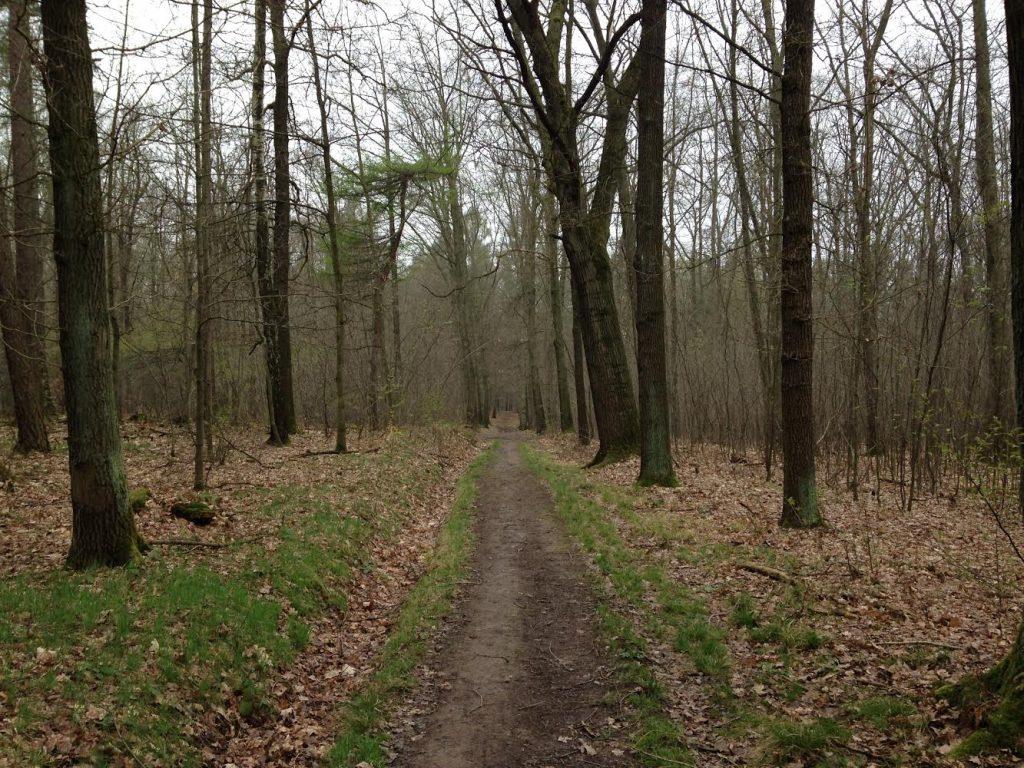 Wald von Vielau