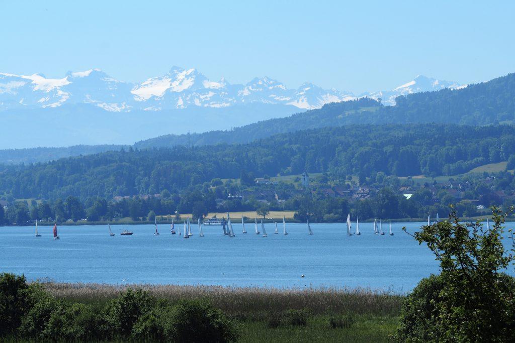 Segelregatta im Greifensee mit Glarner Alpen im Hintergrund