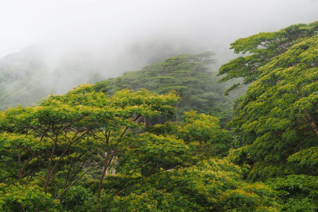 Noch hängt Nebeln in den Bäumen unterhalb des Nid d'Aigle, Seychellen