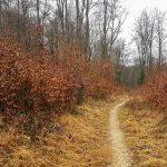 Der Alte Paradiesweg oberhalb von Muttenz