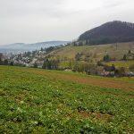 Blick auf die Weinberge von Muttenz