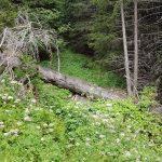 Trail oberhalb von Zernez